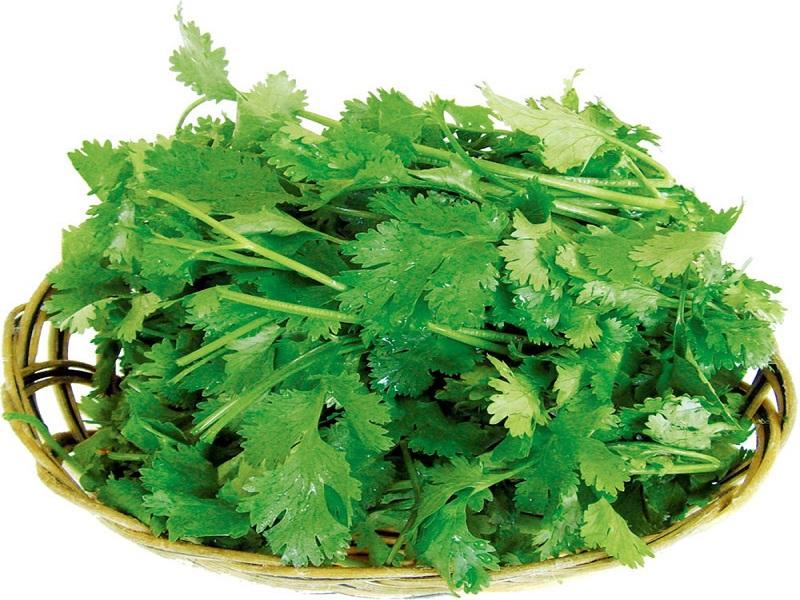 Mách nhỏ cách trị môi thâm từ rau mùi đơn giản và hiệu quả