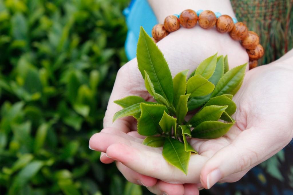Sữa Tắm Tinh Chất Trà Xanh Nature Fresh Green Tea 750ml